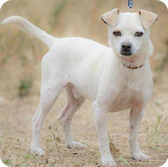 Terrier (Unknown Type, Medium) Mix Dog for adoption in BELL GARDENS, California - EMMET