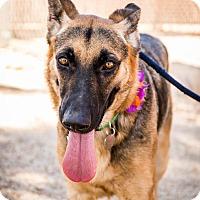 Adopt A Pet :: Mysta - Phoenix, AZ