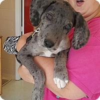 Adopt A Pet :: Tucker - Uxbridge, MA
