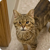 Adopt A Pet :: Colonel - Byron Center, MI