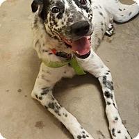 Adopt A Pet :: Spots - Winston-Salem, NC