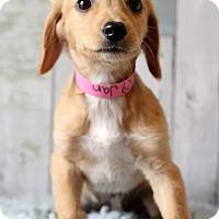 Adopt A Pet :: Jan - Waldorf, MD