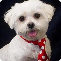 Adopt A Pet :: Buddy - Phelan, CA