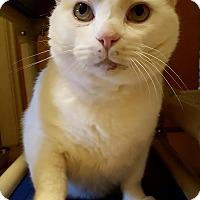 Adopt A Pet :: Knot - Salisbury, MA