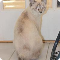 Adopt A Pet :: Yoshi - Fairfax, VA