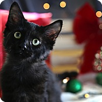 Adopt A Pet :: Blackberry - Palmdale, CA