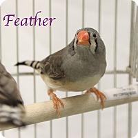Adopt A Pet :: Feather - Bradenton, FL