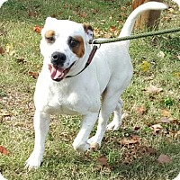 Adopt A Pet :: Skipper - Livingston, TX