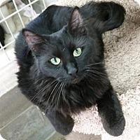 Adopt A Pet :: Vampirella - Montgomery City, MO