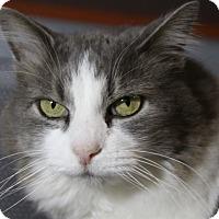Adopt A Pet :: Trickster - Sarasota, FL