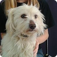 Adopt A Pet :: Betty - Thousand Oaks, CA