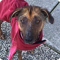 Adopt A Pet :: Telly - Chico, CA