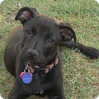 Adopt A Pet :: EMILY - Torrance, CA