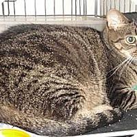 Adopt A Pet :: Naomi - Sterling Hgts, MI