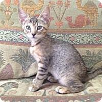 Adopt A Pet :: Lana - Bonita Springs, FL