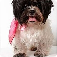 Adopt A Pet :: Guinevere - New York, NY