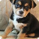 Adopt A Pet :: Klondike