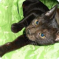 Adopt A Pet :: Ebby - Bronx, NY