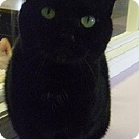 Adopt A Pet :: Raven - Hamburg, NY