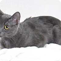 Adopt A Pet :: Jesse - Roseville, CA
