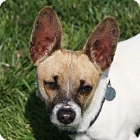 Adopt A Pet :: Phil - Edmonton, AB