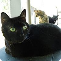 Adopt A Pet :: Carrie - Jupiter, FL