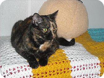 Domestic Mediumhair Cat for adoption in Spring Lake, New Jersey - Serafina