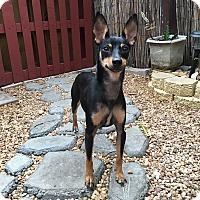 Adopt A Pet :: Luna - Davie, FL