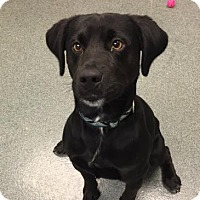 Adopt A Pet :: Colt - Mt. Pleasant, MI