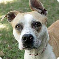Adopt A Pet :: Caramel - Williamsburg, VA