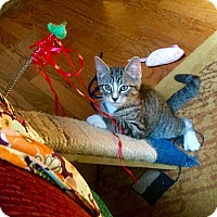 Adopt A Pet :: Emerald, Jasper, Jayden - Southington, CT