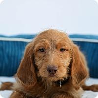 Adopt A Pet :: Marley - Auburn, CA