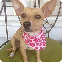 Adopt A Pet :: Mia (BH) - Santa Ana, CA