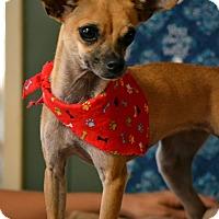 Adopt A Pet :: Suzie - Okeechobee, FL