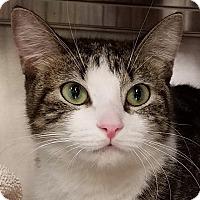 Adopt A Pet :: Pixie - New York, NY