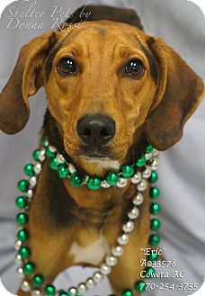 Black and Tan Coonhound Mix Dog for adoption in Newnan City, Georgia - Eric