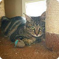 Adopt A Pet :: Amari - Fredericksburg, TX