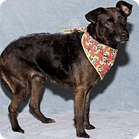 Adopt A Pet :: Linn - Mt. Prospect, IL
