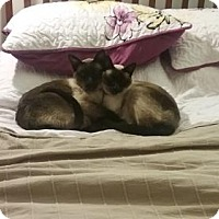 Adopt A Pet :: Moiche - Greeley, CO