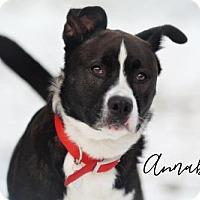 Adopt A Pet :: Annabelle - Joliet, IL