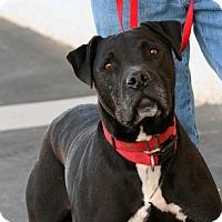 Adopt A Pet :: Ernie - Palmdale, CA