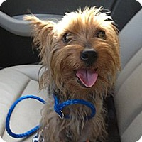 Adopt A Pet :: Kelsey Boy - St. Petersburg, FL