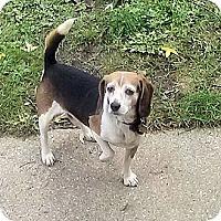 Adopt A Pet :: Runt - Novi, MI