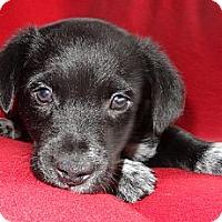Adopt A Pet :: Valentino - Hadley, MI