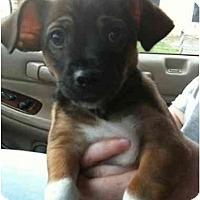 Adopt A Pet :: Hercules - Arlington, TX
