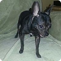 Adopt A Pet :: BERTHA - Okatie, SC