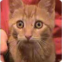 Adopt A Pet :: Echo - Jenkintown, PA