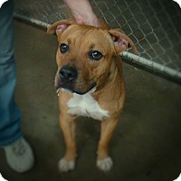Adopt A Pet :: TOMMY - Henderson, KY
