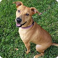 Adopt A Pet :: kara Beara - Pflugerville, TX