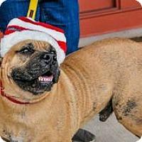 Adopt A Pet :: Hondo - Austin, TX